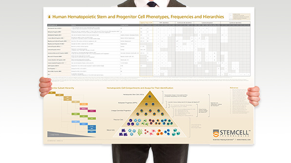Download this wallchart for a handy overview of the subset hierarchy, including their frequencies and phenotypes.