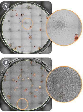 Improved Visualization of Colonies in Cord Blood CFU Assays After RBC Depletion with ErythroClear