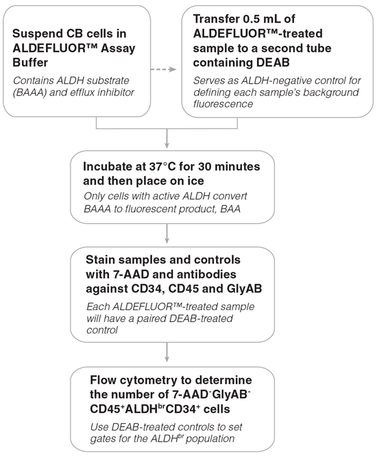 Figure 1. General ALDH<sup>br</sup> Assay Procedure