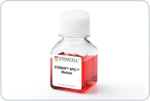 StemDiff-Apel