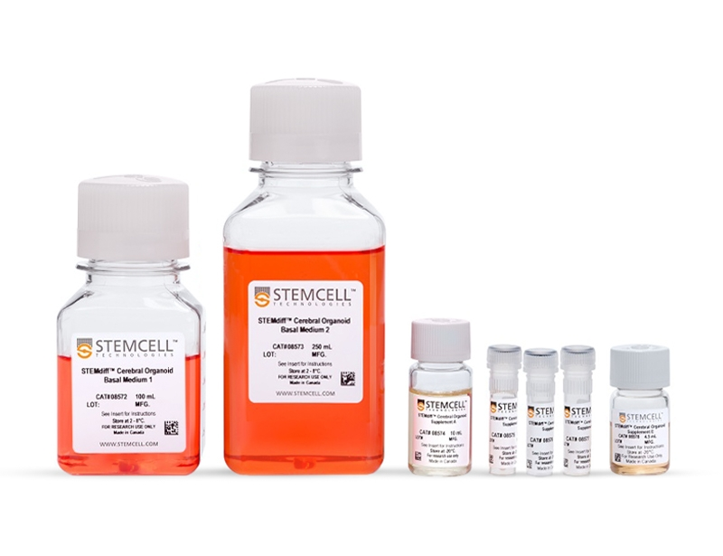 STEMdiff™ Cerebral Organoid Kit