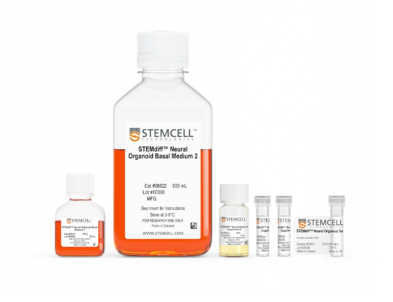 STEMdiff™ Ventral Forebrain Organoid Differentiation Kit