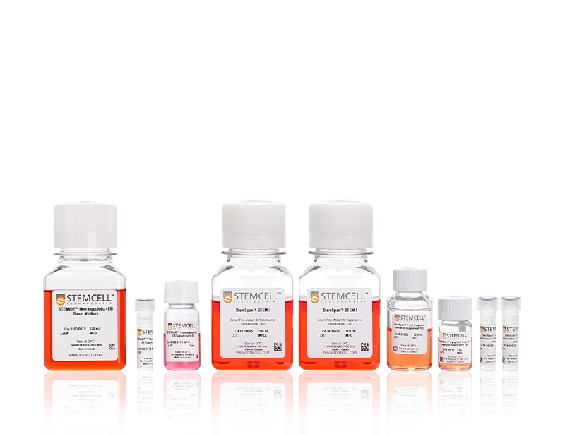 Differentiate hPSCs to T cells using the STEMdiff™ T Cell Kit