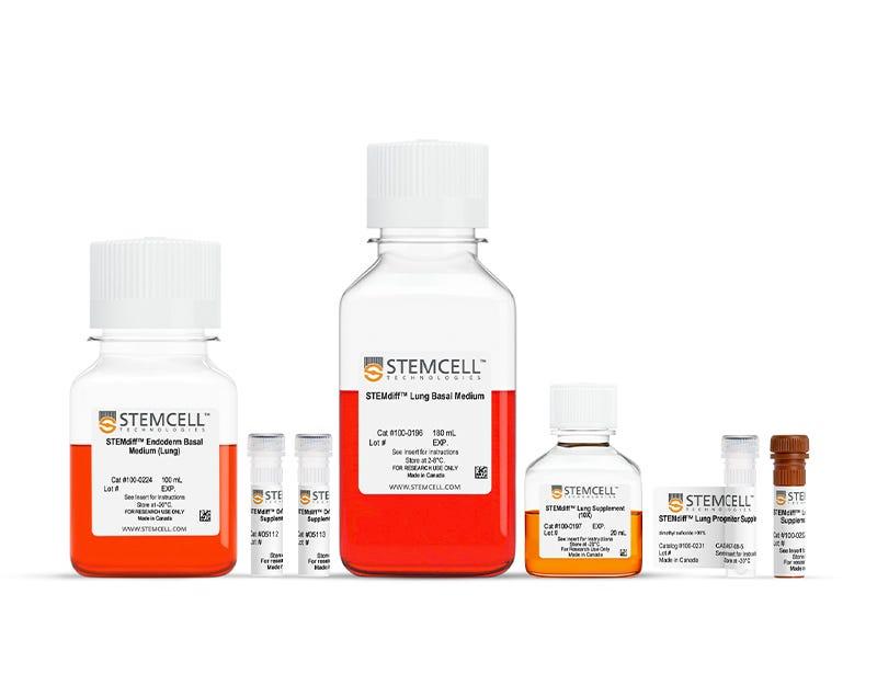 STEMdiff™ Lung Progenitor Kit