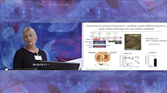 Parkinson's Disease Therapy with Human Embryonic Stem Cells