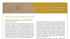 Endothelial Cells, Angiogenesis, and Vasculogenesis