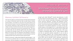 Monolayer Culture of Human Mammary Epithelial Cells