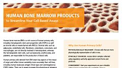 Human Bone Marrow Cells Product Overview Flyer