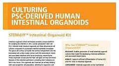 STEMdiff™ Intestinal Organoid Kit