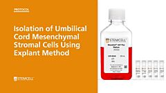 Isolation of Umbilical Cord Mesenchymal Stromal Cells Using Explant Method