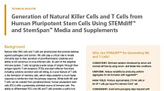 Generation of Natural Killer Cells and T Cells from Human Pluripotent Stem Cells