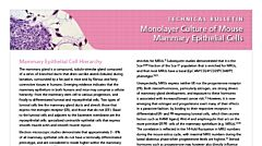 Monolayer Culture of Mouse Mammary Epithelial Cells