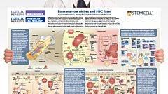 Bone Marrow Niches and HSC Fates