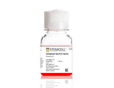 Collagenase Type IV (1 mg/mL)