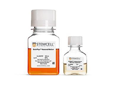 STEMdiff™ Forebrain Neuron Maturation Kit