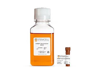STEMdiff™ Neural Crest Differentiation Kit