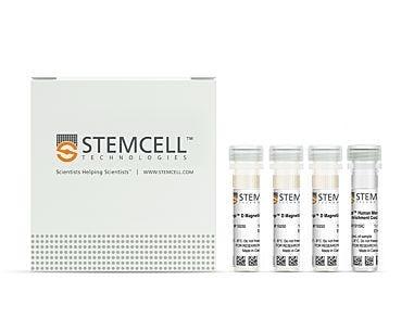EasySep™ Human Memory CD8+ T Cell Enrichment Kit 19159