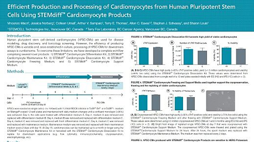 Efficient Production and Processing of Cardiomyocytes from Human Pluripotent Stem Cells Using STEMdiff™ Cardiomyocyte Products