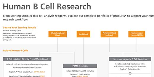 Human B Cell Research Product Workflow