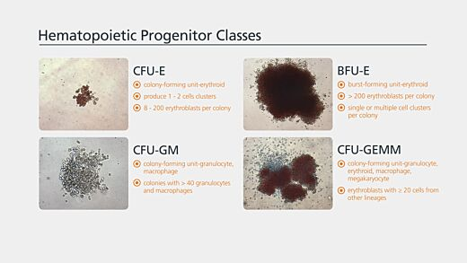 Colony Enumeration and Identification for Custom Hematopoietic Training Courses
