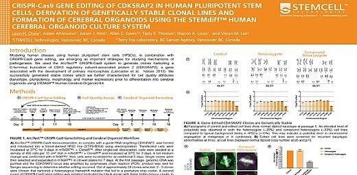CRISPR-Cas9 Gene Editing Of CDK5RAP2 In Human Pluripotent Stem Cells