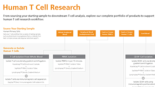 Human T Cell Research Product Workflow