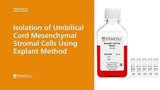 Isolation of Umbilical Cord Mesenchymal Stromal Cells Using Explant Method