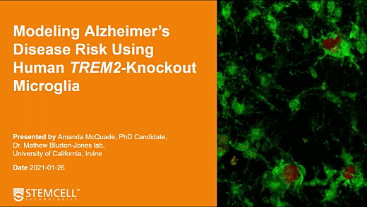 Modeling Alzheimer's risk using human TREM2-knockout microglia