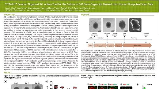STEMdiff Cerebral Organoid Kit: A New Tool for the Culture of 3D Brain Organoids Derived from Human Pluripotent Stem Cells