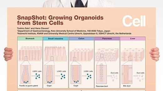 SnapShot: Growing Organoids from Stem Cells