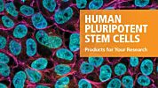 Products for Human Pluripotent Stem Cells