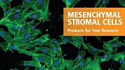 Products for Your Mesenchymal Stromal Cell Research
