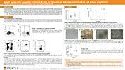 Robust Serum-Free Expansion of Human B Cells In Vitro with an Animal Component-Free Cell Culture Supplement