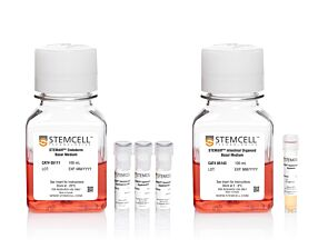 STEMdiff™ Intestinal Organoid Kit|05140