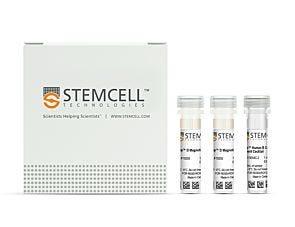 EasySep™ Human B Cell Enrichment Kit|19054