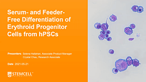 Serum- and Feeder-Free Differentiation of Erythroid Progenitor Cells from hPSCs