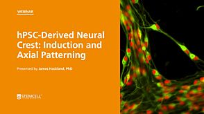 hPSC-Derived Neural Crest: Induction and Axial Patterning