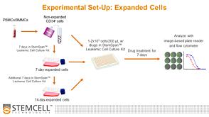 Troubleshooting In Vitro Expansion of Leukemic Cells