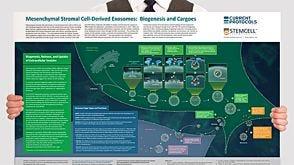 Mesenchymal Stromal Cell-Derived Exosomes: Biogenesis and Cargoes