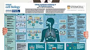 Cellular Organization and Biology of the Respiratory System