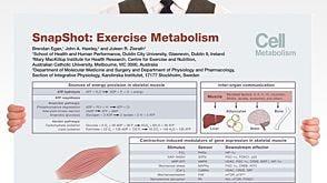 SnapShot: Exercise Metabolism