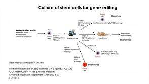 CRISPR-Cas9 Editing of Hematopoietic Stem and Progenitor Cells