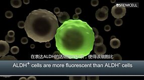 ALDEFLUOR™: Detect Normal and Cancer Precursor Cells