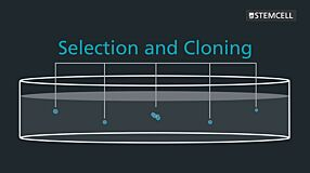 Semi-Solid Cloning with ClonaCell™