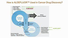 ALDH+ Cancer Precursor Cells in Drug Response Prediction
