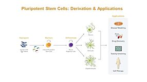 Modeling Human Neurological Disease with Induced Pluripotent Stem Cells