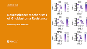 STEMCELL Journal Club: Mechanisms of Glioblastoma Resistance