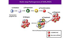 Identification of Stem Cells in Myeloid Malignancies - Opportunities for Discovery and Translation