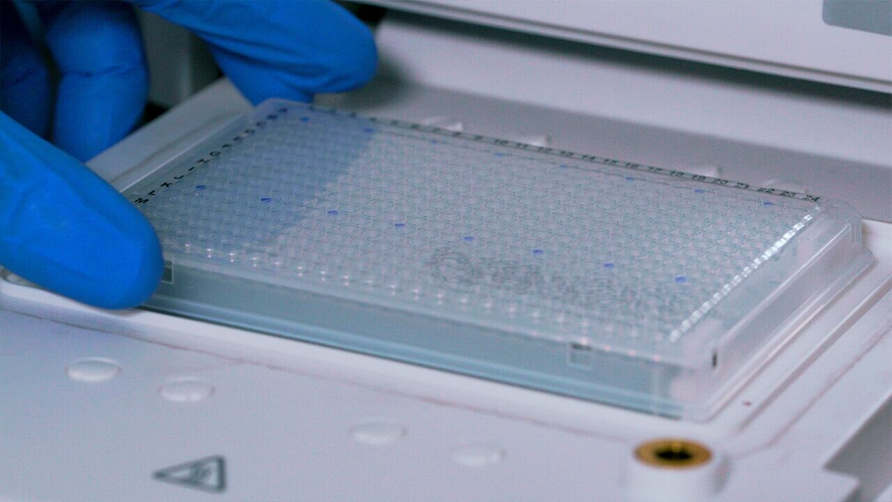 How to Set Up an Assay with the hPSC Genetic Analysis Kit Experiment