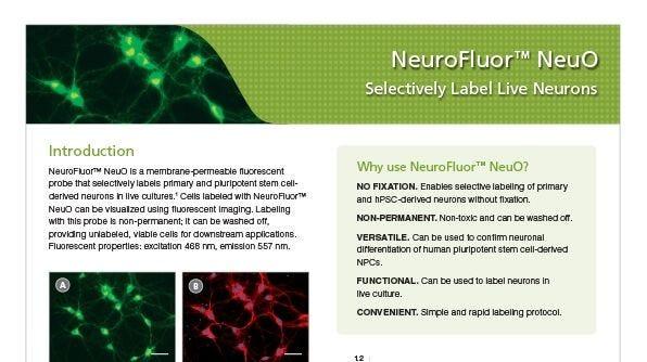 NeuroFluor™ NeuO Selectively Label Live Neurons